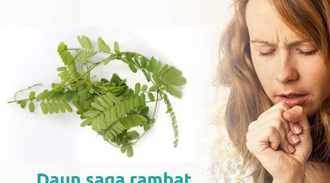 daun saga obat unutk batuk sariawan dan deman tinggi