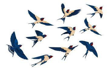 manfaat burung walet